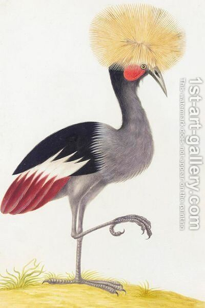 A Crowned Crane by (after) Nicolas Robert - Reproduction Oil Painting