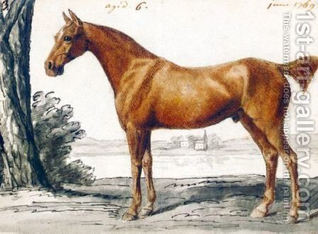 A Bay Horse by English School - Reproduction Oil Painting