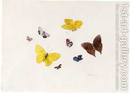 Butterflies And Moths by Anton Henstenburgh - Reproduction Oil Painting