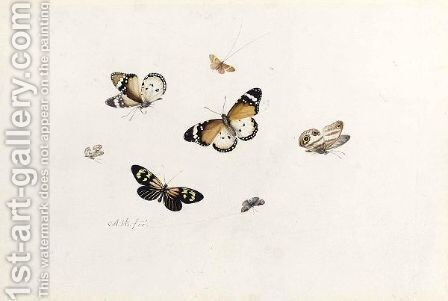 Studies Of Seven Butterflies by Anton Henstenburgh - Reproduction Oil Painting