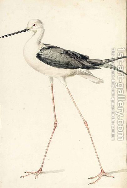A Black-Winged Stilt by (after) Aert Schouman - Reproduction Oil Painting