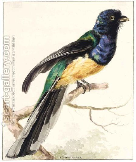 A White-Tailed Trogon by Cornelis Van Hardenbergh - Reproduction Oil Painting