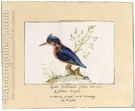 A Kingfisher by Dutch School - Reproduction Oil Painting