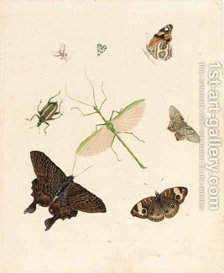 Butterflies And Other Insects by Dutch School - Reproduction Oil Painting