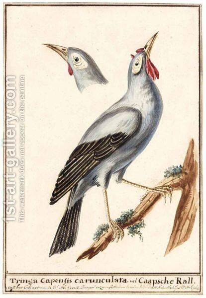 A Wattled Starling by Dutch School - Reproduction Oil Painting