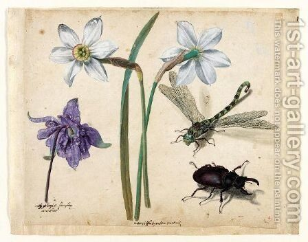 A Sheet Of Studies Of Flowers And Insects Two Narcissi And A Columbine, With A Dragonfly And A Stag Beetle by Jacques (de Morgues) Le Moyne - Reproduction Oil Painting