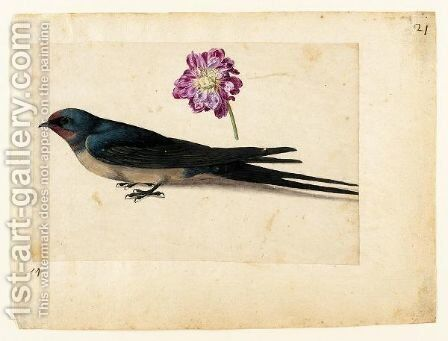 A Sheet Of Studies With A Swallow And A Double Gilliflower by Jacques (de Morgues) Le Moyne - Reproduction Oil Painting