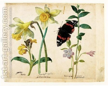 A Sheet Of Studies Of Flowers A Gilliflower, Two Wild Daffodils, A Lesser Periwinkle And A Red Admiral Butterfly by Jacques (de Morgues) Le Moyne - Reproduction Oil Painting