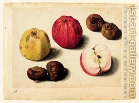 A Sheet Of Studies Of Fruits Apples, Chestnuts And Medlars by Jacques (de Morgues) Le Moyne - Reproduction Oil Painting