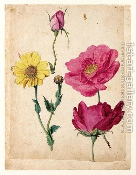 A Sheet Of Studies With French Roses And An Ox-Eye-Daisy by Jacques (de Morgues) Le Moyne - Reproduction Oil Painting