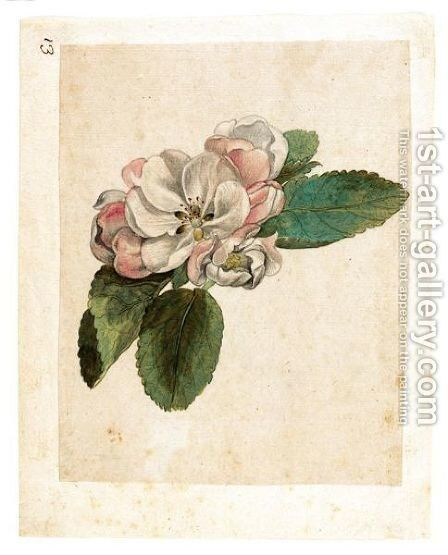 Study Of An Apple Blossom by Jacques (de Morgues) Le Moyne - Reproduction Oil Painting