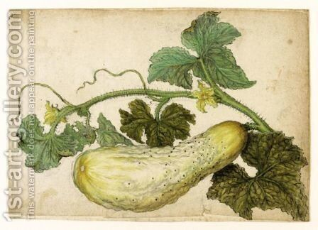 Study Of A Cucumber, With Its Leaves by (after) Le Moyne, Jacques (de Morgues) - Reproduction Oil Painting
