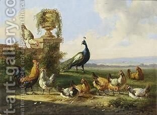 Chicken And A Peacock In A Garden by Albertus Verhoesen - Reproduction Oil Painting