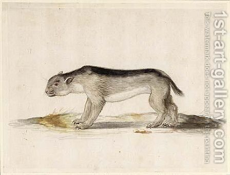 A Small Carnivore by Dutch School - Reproduction Oil Painting