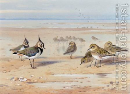 Lapwing And Golden Plover 2 by Archibald Thorburn - Reproduction Oil Painting
