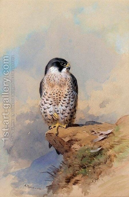 A Peregrine Falcon by Archibald Thorburn - Reproduction Oil Painting