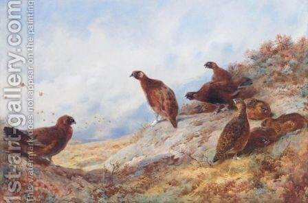 Cock And Hen Red Grouse High On The Moor by Archibald Thorburn - Reproduction Oil Painting