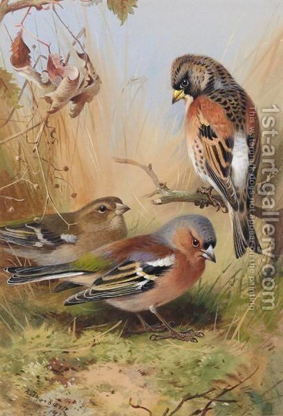 A Brambling And A Pair Of Chaffinches by Archibald Thorburn - Reproduction Oil Painting