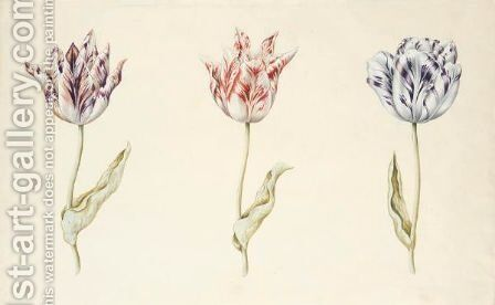 Three Tulips 'Van Ijsertsen', 'Witte Mervelye' And 'Admirael Latour' by Dutch School - Reproduction Oil Painting