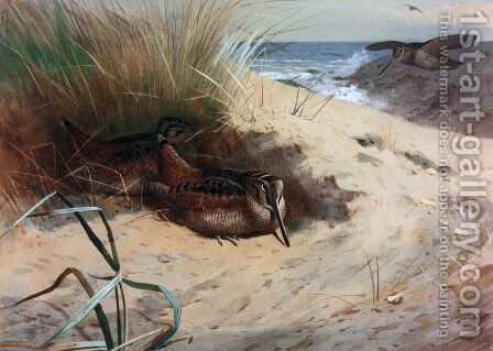 Woodcock Nesting On A Beach 2 by Archibald Thorburn - Reproduction Oil Painting