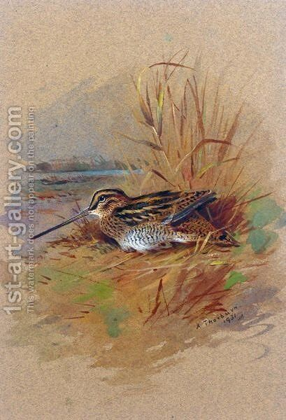 A Snipe Sheltering by Archibald Thorburn - Reproduction Oil Painting