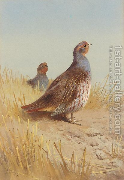 A Pair Of English Partridges by Archibald Thorburn - Reproduction Oil Painting