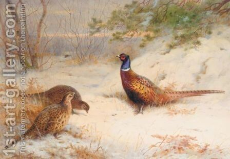 A Winter Dawn, Pheasants In The Snow by Archibald Thorburn - Reproduction Oil Painting