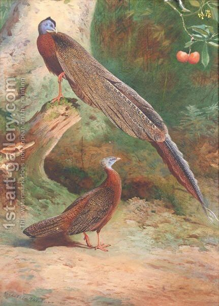 A Pair Of Malay Arguses by Archibald Thorburn - Reproduction Oil Painting