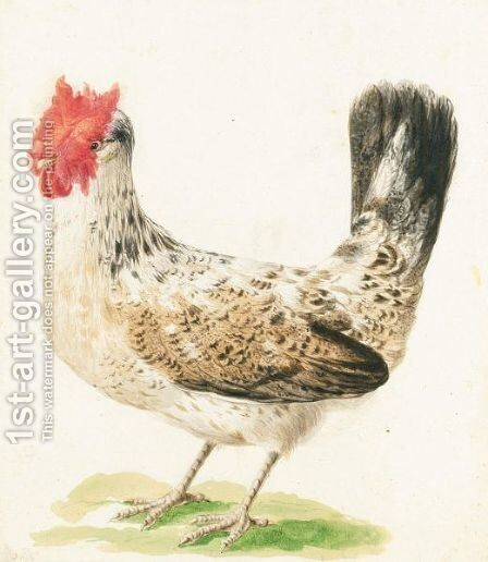 Gallo by Italian School - Reproduction Oil Painting