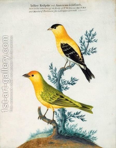 A Yellow Redpole And An American Goldfinch by Isaac Spackman - Reproduction Oil Painting
