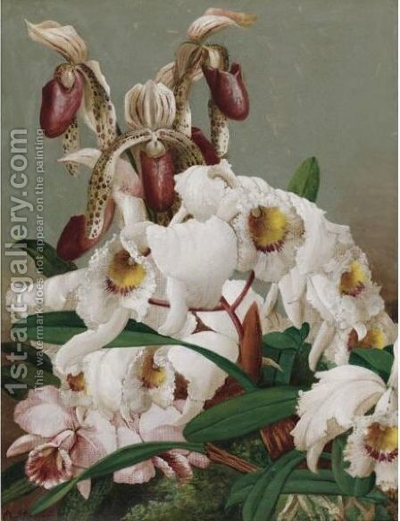 Orchids by Charles Storer - Reproduction Oil Painting