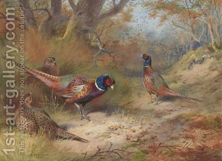 Ring Neck Pheasants by Archibald Thorburn - Reproduction Oil Painting