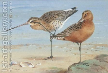 A Pair Of Bar-Tailed Godwit by Archibald Thorburn - Reproduction Oil Painting
