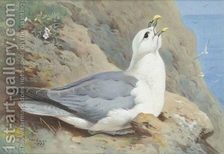 A Fulmar Petrel by Archibald Thorburn - Reproduction Oil Painting
