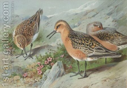 A Trio Of Knots by Archibald Thorburn - Reproduction Oil Painting