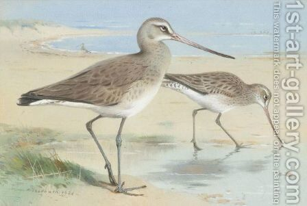 A Pair Of Black-Tailed Godwit by Archibald Thorburn - Reproduction Oil Painting
