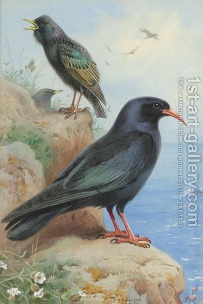 A Rock Starling And A Common Chough by Archibald Thorburn - Reproduction Oil Painting