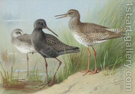 A Trio Of Redshank by Archibald Thorburn - Reproduction Oil Painting