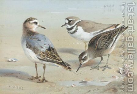 A Knot, A Sandpiper And A Little Ringed Plover by Archibald Thorburn - Reproduction Oil Painting