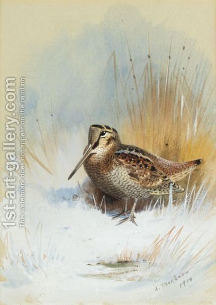 A Woodcock by Archibald Thorburn - Reproduction Oil Painting