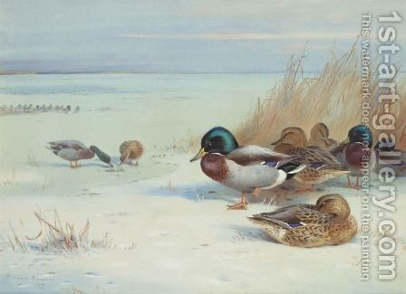 Mallards On A Frozen Lake by Archibald Thorburn - Reproduction Oil Painting