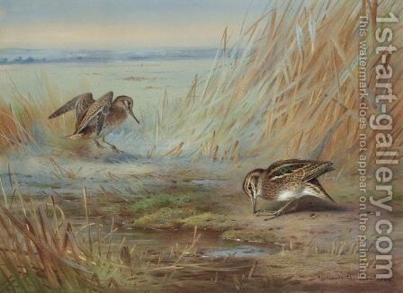 Common Snipe On Marshland by Archibald Thorburn - Reproduction Oil Painting