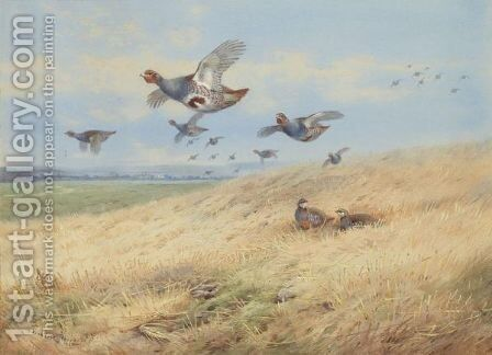Grey Partridges In Flight by Archibald Thorburn - Reproduction Oil Painting