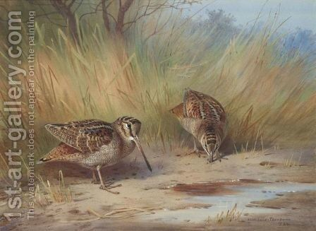 A Pair Of Woodcock by Archibald Thorburn - Reproduction Oil Painting