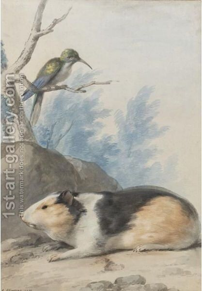A Guinea Pig, With A Hummingbird On A Branch Above by Aert Schouman - Reproduction Oil Painting