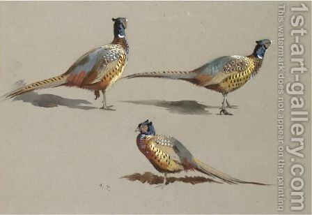 Studies Of A Cock Pheasant by Archibald Thorburn - Reproduction Oil Painting