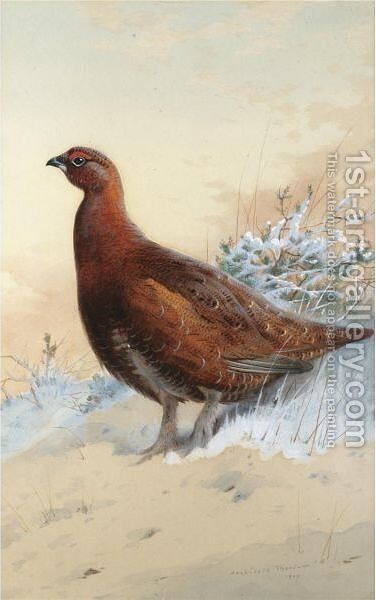 A Red Grouse In The Snow by Archibald Thorburn - Reproduction Oil Painting