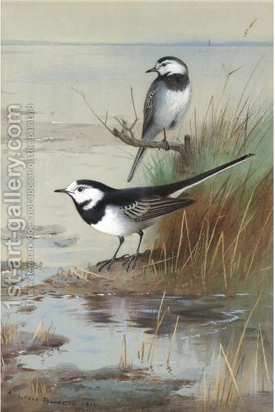 A Pair Of Pied Wagtails by Archibald Thorburn - Reproduction Oil Painting