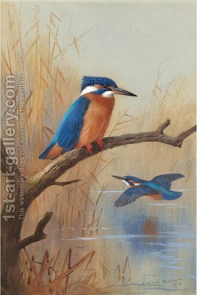 A Pair Of Kingfishers by Archibald Thorburn - Reproduction Oil Painting