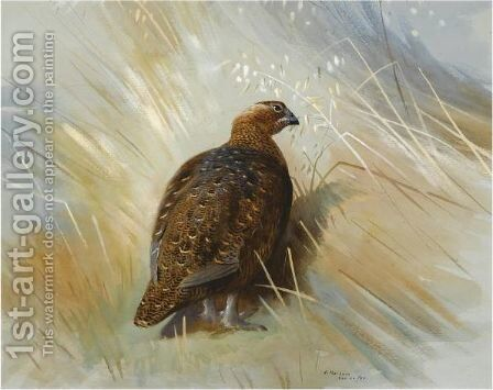 Grouse by Archibald Thorburn - Reproduction Oil Painting
